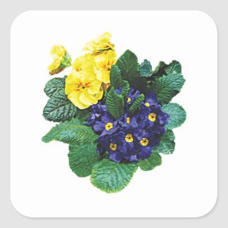 Clusters of Purple and Yellow Primroses Square Sticker