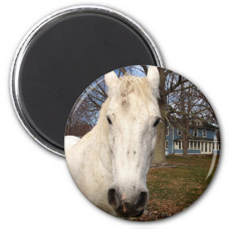 Clydesdale 2 Inch Round Magnet