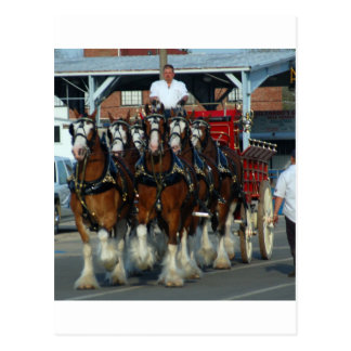 Clydesdale 6 horse hitch postcard