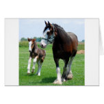Clydesdale and Filly Card
