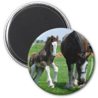 clydesdale and filly refrigerator magnet