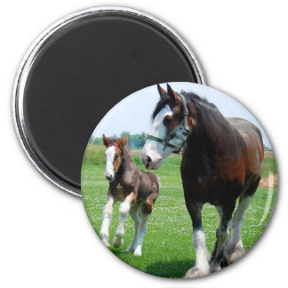 Clydesdale and Filly Fridge Magnet