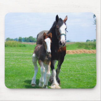 Clydesdale and filly mousepad