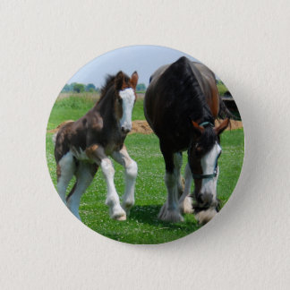 clydesdale and filly pinback button