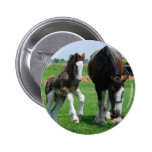clydesdale and filly pinback buttons