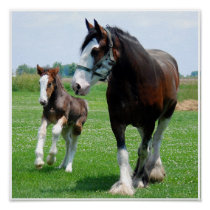 Clydesdale and Filly print