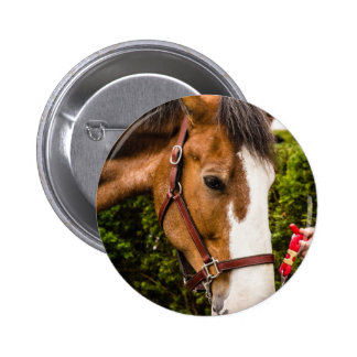Clydesdale Pinback Button