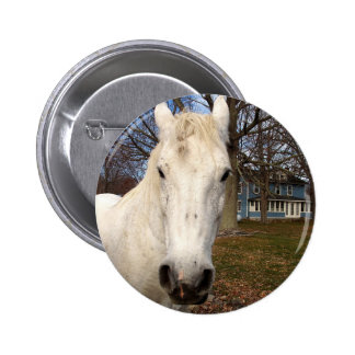 Clydesdale Buttons