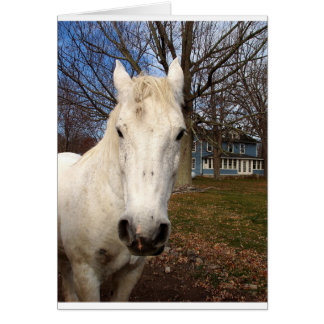Clydesdale Cards