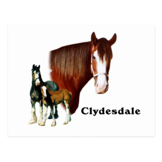 Clydesdale design postcards