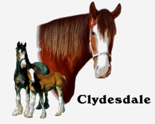 Clydesdale design T-Shirt