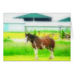 Clydesdale Draft Horse Card