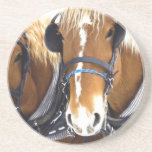 Clydesdale Draft Horse Coasters