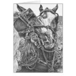 Clydesdale Draft Horse Drawing by Kelli Swan Greeting Cards