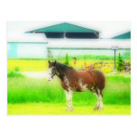 Clydesdale Draft Horse Post Card
