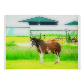 Clydesdale Draft Horse Poster