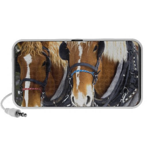 Clydesdale Draft Horse Speakers
