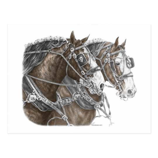 Clydesdale Draft Horse Team Postcard