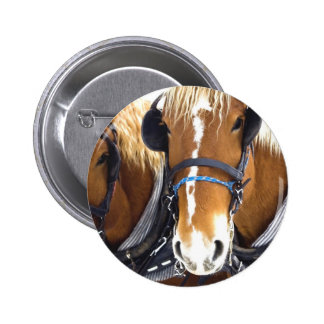 Clydesdale Draft Horses Button