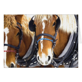 Clydesdale Draft Horses Card