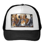 Clydesdale Draft Horses Hat