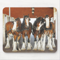 Clydesdale Draft Horses in the Barn Mousepads