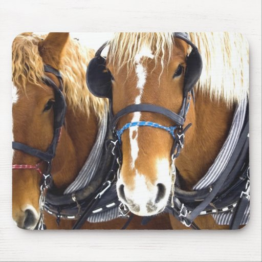 Clydesdale Draft Horses Mousepad