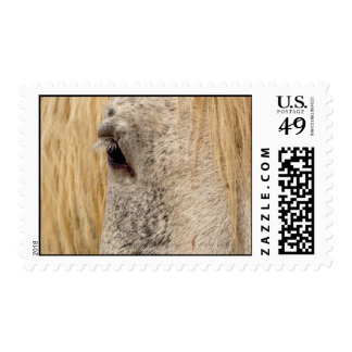 Clydesdale Eye Postage Stamp