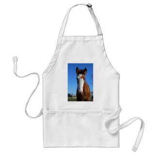 Clydesdale filly adult apron