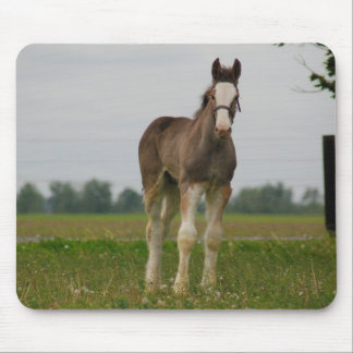 clydesdale filly mouse pad