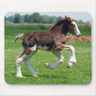 Clydesdale filly mousepad