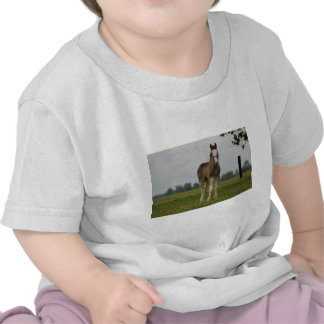 clydesdale filly t shirt