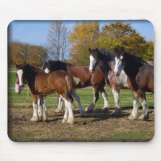 clydesdale group mouse pad