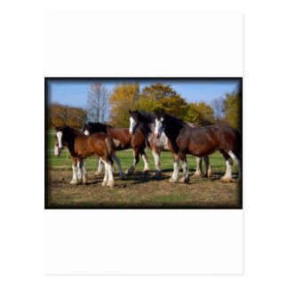 clydesdale group postcard