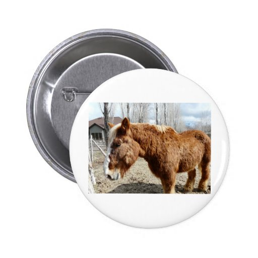 Clydesdale horse 2 pinback button