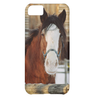 Clydesdale horse cover for iPhone 5C