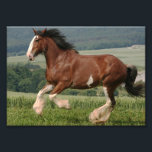 "Clydesdale Horse Photo Print<br><div class=""desc"">Clydesdale Horse</div>"