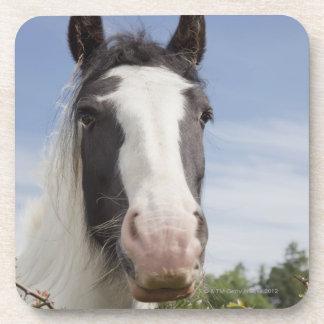 Clydesdale horse portrait drink coaster