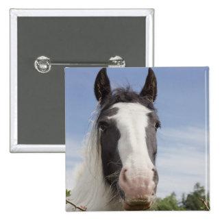 Clydesdale horse portrait pinback button