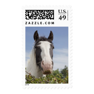 Clydesdale horse portrait postage stamp