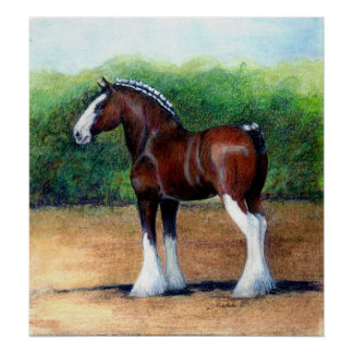 Clydesdale Horse Portrait Poster