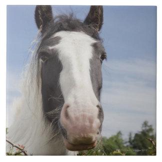 Clydesdale horse portrait large square tile