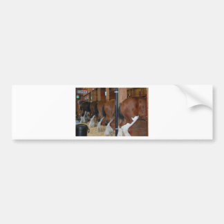 Clydesdale horses bumper sticker