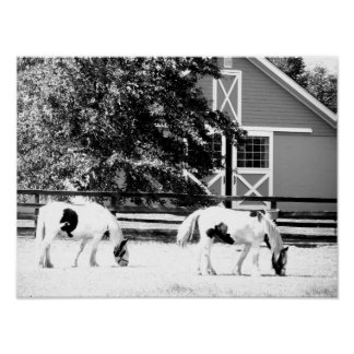 Clydesdale Horses Grazing (Black and White) Poster