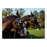 Clydesdale Horses Greeting Cards