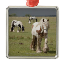 Clydesdale horses in a field, Northumberland, Metal Ornament