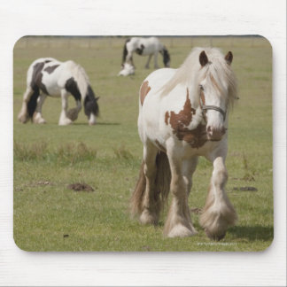 Clydesdale horses in a field, Northumberland, Mousepads