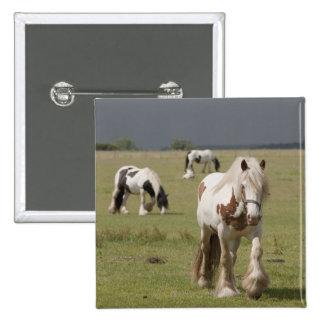 Clydesdale horses in a field, Northumberland, Pinback Button