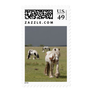 Clydesdale horses in a field, Northumberland, Postage