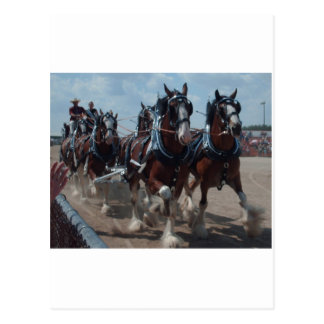Clydesdale Horses Postcard